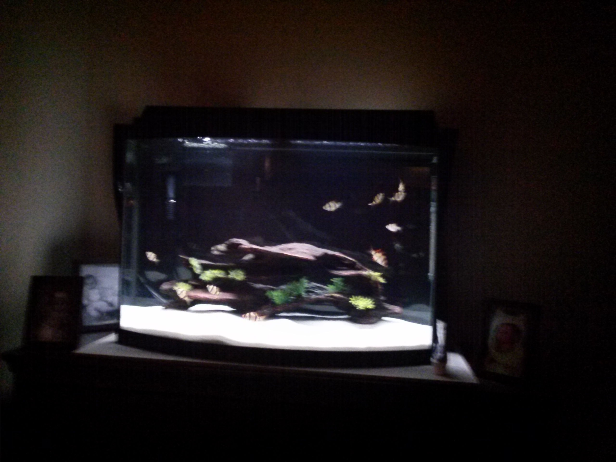 37 gallon the mind of shadow for 37 gallon fish tank